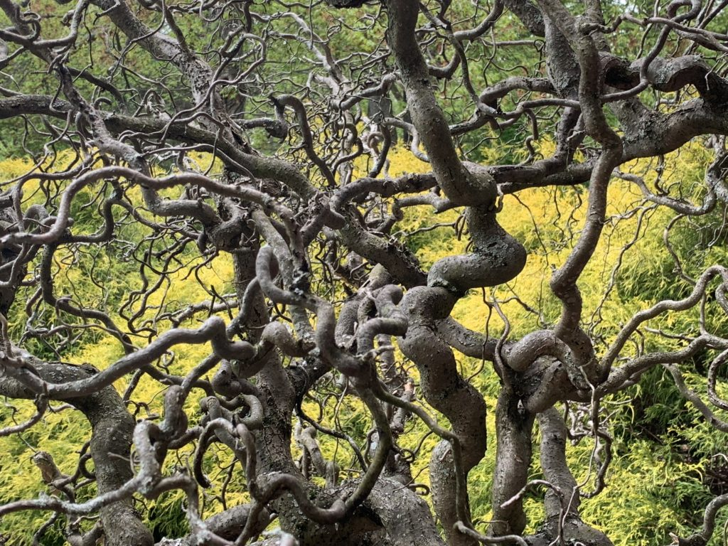 Twisty Branches